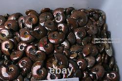 2.2lb Wholesale Price! 80-110 Pcs Rainbow Ammonite Fossil Crystal Specimen