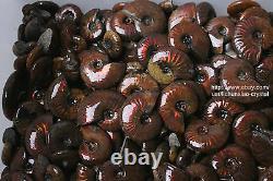 2.2lb Wholesale Price! 80-120 Pcs Rainbow Ammonite Fossil Crystal Specimen