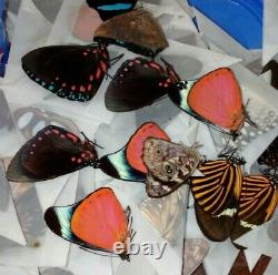 Assortment of 50 Colorful A1 Tropical Butterfly Specimens Unmounted