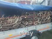 Job Lot Wholesale Red Deer Antlers 1 kg is 29.00 GBP